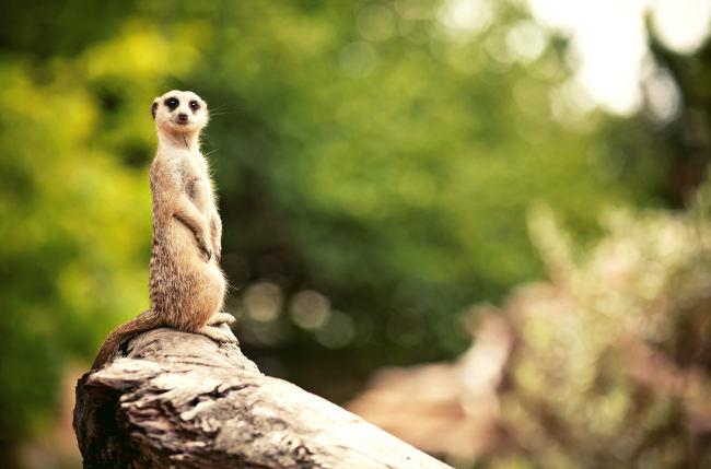 kleines Säugetier auf Felsen im Zoo